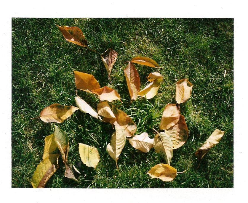 macro su foglie